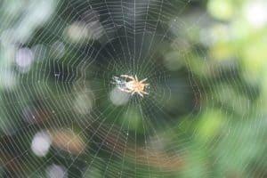 Mantenga las arañas fuera